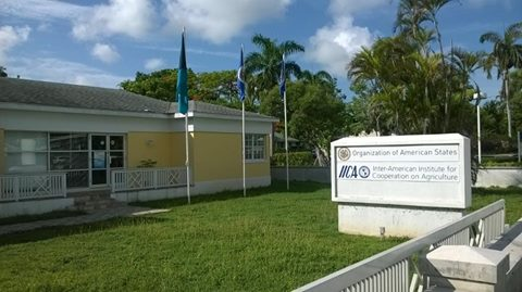 OAS Office in The Bahamas (Commonwealth of)