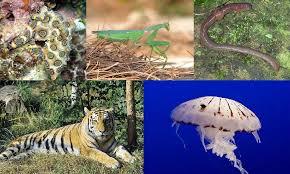 Prácticas De Enseñanza Animales Vertebrados E Invertebrados